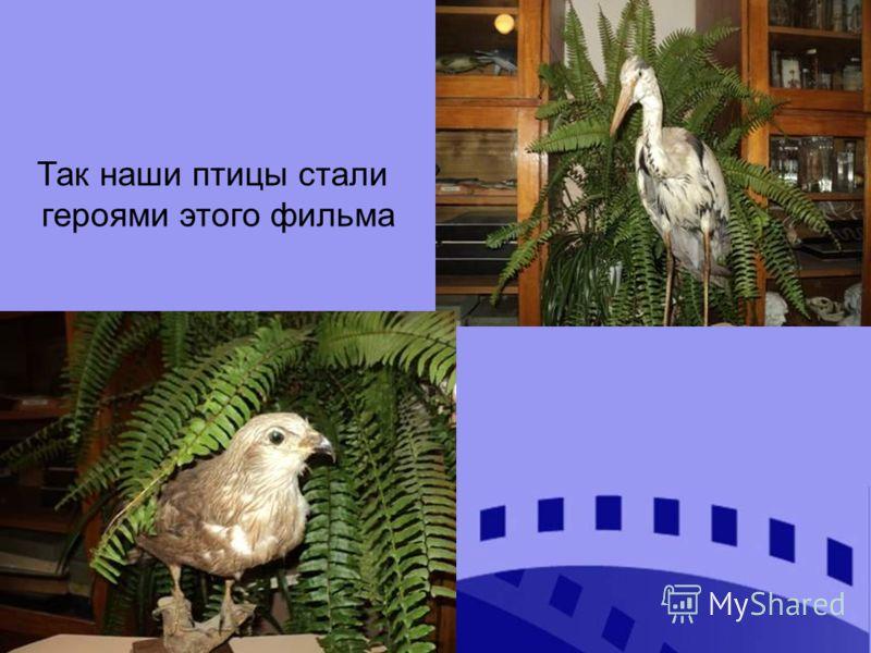 Так наши птицы стали героями этого фильма