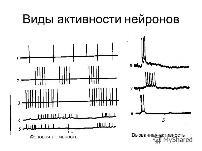 Виды активности нейронов Фоновая активность Вызванная активность