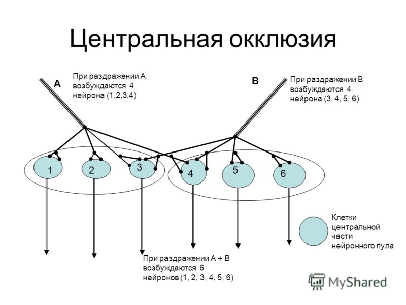 Центральная окклюзия 12 3 4 5 6 А В При раздражении А возбуждаются 4 нейрона (1,2,3,4) При раздражении В возбуждаются 4 нейрона (3, 4, 5, 6) При раздражении А + В возбуждаются 6 нейронов (1, 2, 3, 4, 5, 6) Клетки центральной части нейронного пула