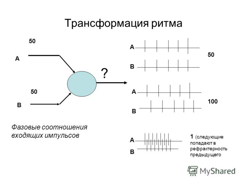 Трансформация ритма 50 ? А В А В А В А В 100 1 (следующие попадают в рефрактерность предыдущего Фазовые соотношения входящих импульсов