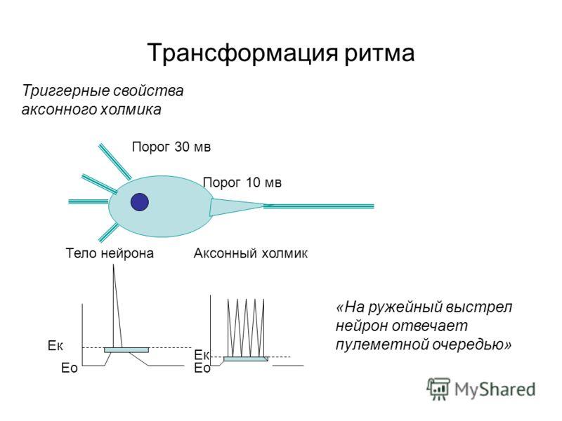 Трансформация ритма Триггерные свойства аксонного холмика Ек Ео Тело нейронаАксонный холмик Порог 30 мв Порог 10 мв «На ружейный выстрел нейрон отвечает пулеметной очередью»
