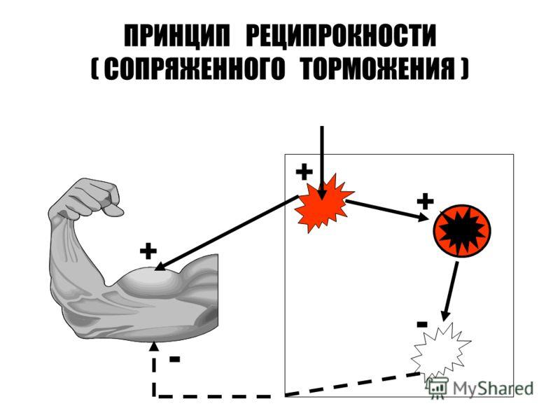 ПРИНЦИП РЕЦИПРОКНОСТИ ( СОПРЯЖЕННОГО ТОРМОЖЕНИЯ ) + + - - +