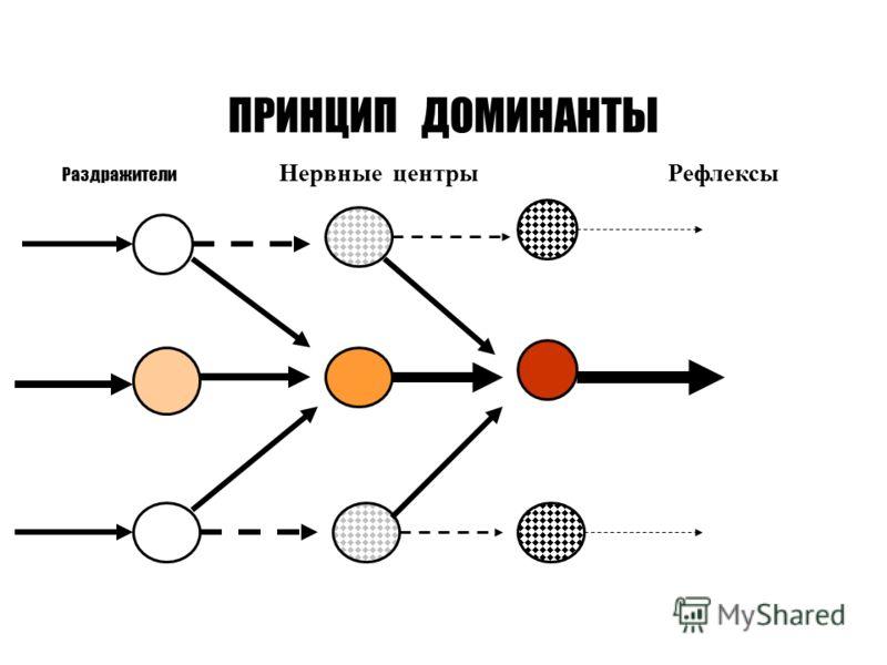 ПРИНЦИП ДОМИНАНТЫ Раздражители Нервные центры Рефлексы