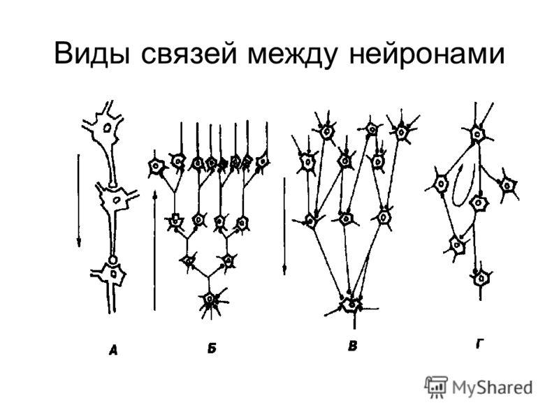 Виды связей между нейронами