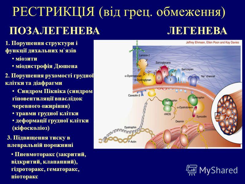 РЕСТРИКЦІЯ (від грец. обмеження) ПОЗАЛЕГЕНЕВА Пневмоторакс (закритий, відкритий, клапанний), гідроторакс, гематоракс, піоторакс ЛЕГЕНЕВА 1. Порушення структури і функції дихальних м`язів 2. Порушення рухомості грудної клітки та діафрагми 3. Підвищенн