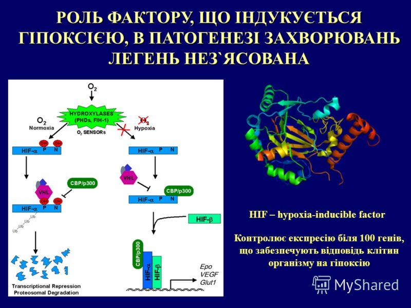 РОЛЬ ФАКТОРУ, ЩО ІНДУКУЄТЬСЯ ГІПОКСІЄЮ, В ПАТОГЕНЕЗІ ЗАХВОРЮВАНЬ ЛЕГЕНЬ НЕЗ`ЯСОВАНА HIF – hypoxia-inducible factor Контролює експресію біля 100 генів, що забезпечують відповідь клітин організму на гіпоксію