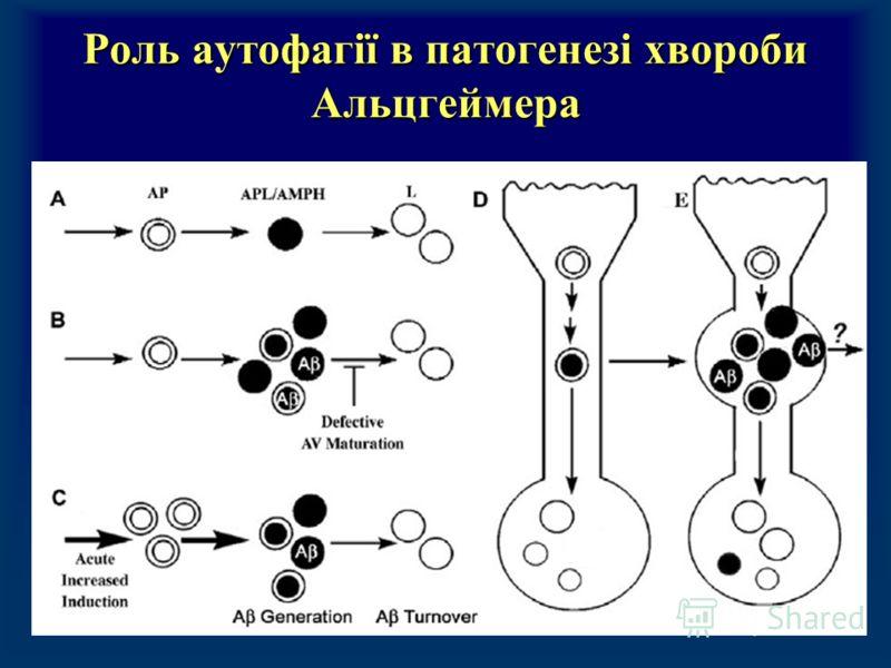 Роль аутофагії в патогенезі хвороби Альцгеймера
