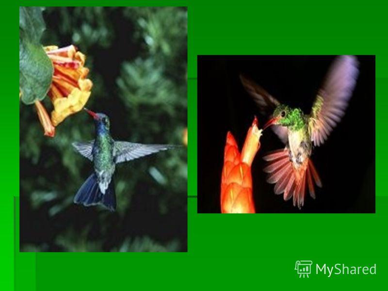 Реферат птицы за 3 класс