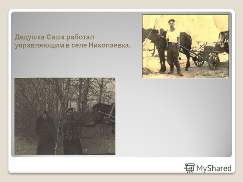 Дедушка Саша работал управляющим в селе Николаевка.