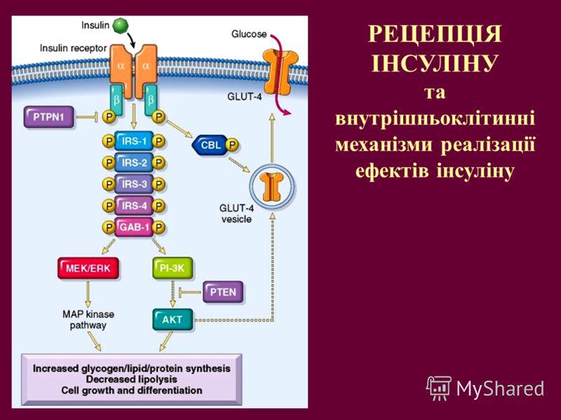 РЕЦЕПЦІЯ ІНСУЛІНУ та внутрішньоклітинні механізми реалізації ефектів інсуліну