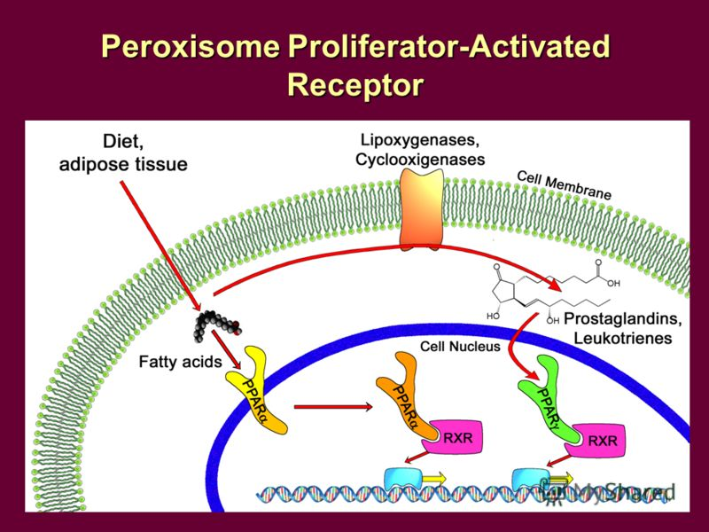 Peroxisome Proliferator-Activated Receptor