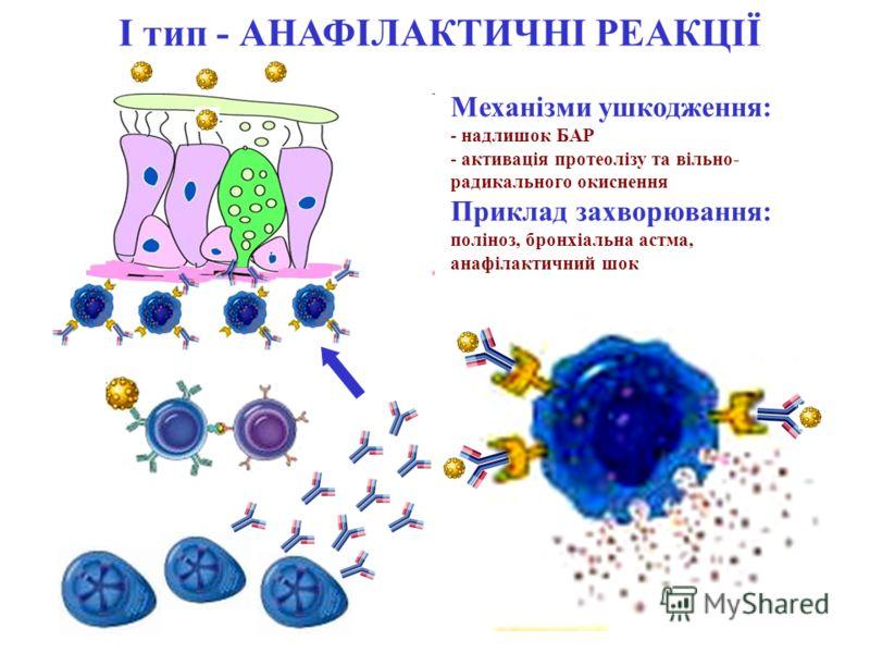 І тип - АНАФІЛАКТИЧНІ РЕАКЦІЇ Механізми ушкодження: - надлишок БАР - активація протеолізу та вільно- радикального окиснення Приклад захворювання: поліноз, бронхіальна астма, анафілактичний шок