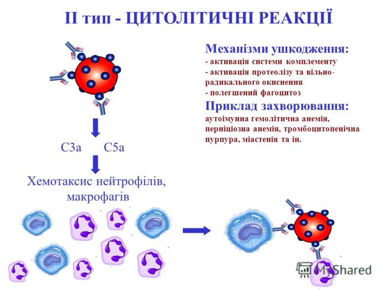 ІІ тип - ЦИТОЛІТИЧНІ РЕАКЦІЇ Механізми ушкодження: - активація системи комплементу - активація протеолізу та вільно- радикального окиснення - полегшений фагоцитоз Приклад захворювання: аутоімунна гемолітична анемія, перніціозна анемія, тромбоцитопені