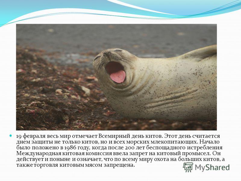 День Защиты Морских Млекопитающих Презентация