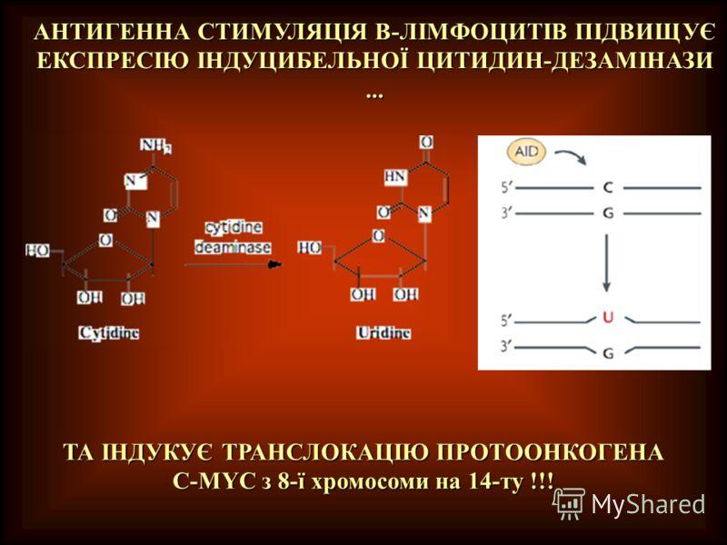 АНТИГЕННА СТИМУЛЯЦІЯ В-ЛІМФОЦИТІВ ПІДВИЩУЄ ЕКСПРЕСІЮ ІНДУЦИБЕЛЬНОЇ ЦИТИДИН-ДЕЗАМІНАЗИ... ТА ІНДУКУЄ ТРАНСЛОКАЦІЮ ПРОТООНКОГЕНА C-MYC з 8-ї хромосоми на 14-ту !!!