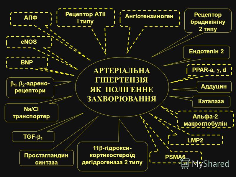 АРТЕРІАЛЬНА ГІПЕРТЕНЗІЯ ЯК ПОЛІГЕННЕ ЗАХВОРЮВАННЯ PPAR-a,, d AПФ Рецептор АТІІ I типу Ангіотензиноген Рецептор брадикініну 2 типу Ендотелін 2 Каталаза Альфа-2 макроглобулін PSMA6 11 -гідрокси- кортикостероїд дегідрогеназа 2 типу Простагландин синтаза
