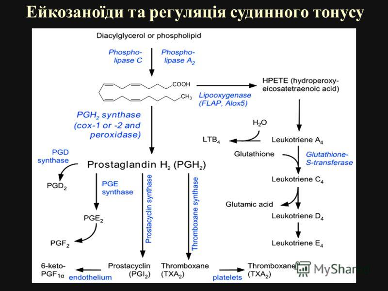 Ейкозаноїди та регуляція судинного тонусу