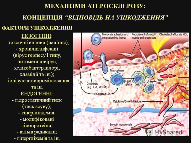 МЕХАНІЗМИ АТЕРОСКЛЕРОЗУ: КОНЦЕПЦІЯ ВІДПОВІДЬ НА УШКОДЖЕННЯ ФАКТОРИ УШКОДЖЕННЯ ЕКЗОГЕННІ: - токсичні впливи (паління); - хронічні інфекції (вірус герпесу I типу, цитомегаловірус, хелікобактер пілорі, хламідії та ін.); - іонізуюче випромінювання та ін.