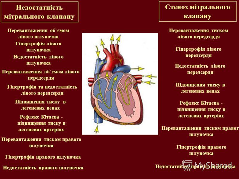 Недостатність мітрального клапану Перевантаження об`ємом лівого шлуночка Гіпертрофія лівого шлуночка Недостатність лівого шлуночка Підвищення тиску в легеневих венах Рефлекс Кітаєва - підвищення тиску в легеневих артеріях Перевантаження тиском правог