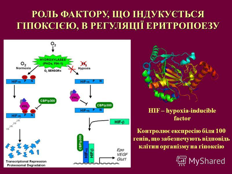 РОЛЬ ФАКТОРУ, ЩО ІНДУКУЄТЬСЯ ГІПОКСІЄЮ, В РЕГУЛЯЦІЇ ЕРИТРОПОЕЗУ HIF – hypoxia-inducible factor Контролює експресію біля 100 генів, що забезпечують відповідь клітин організму на гіпоксію