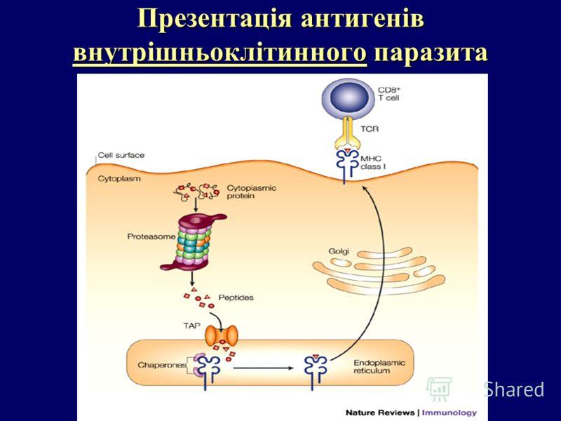 Презентація антигенів внутрішньоклітинного паразита