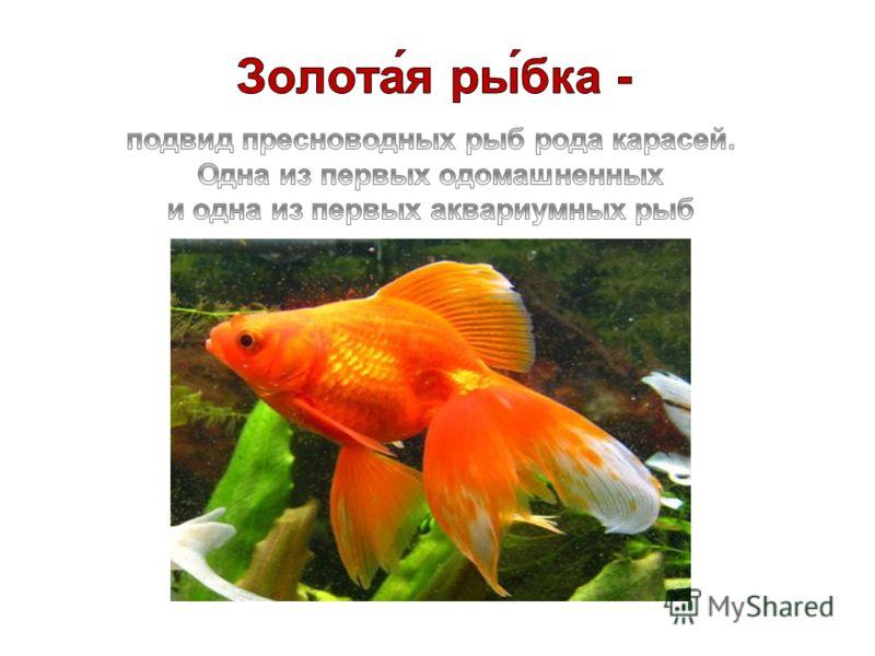 подвид пресноводных рыб рода