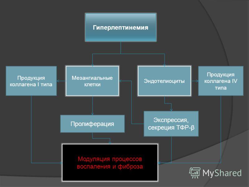 Экспрессия, секреция ТФР-β Модуляция процессов воспаления и фиброза Продукция коллагена I типа Гиперлептинемия Мезангиальные клетки Пролиферация Эндотелиоциты Продукция коллагена IV типа