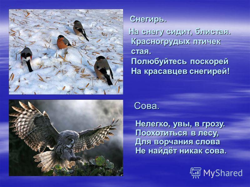 Снегирь. Снегирь. На снегу сидит, блистая. Красногрудых птичек стая. Полюбуйтесь поскорей На красавцев снегирей! На снегу сидит, блистая. Красногрудых птичек стая. Полюбуйтесь поскорей На красавцев снегирей! Сова. Сова. Нелегко, увы, в грозу. Поохоти