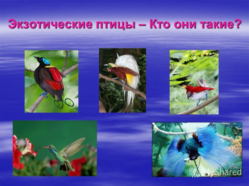 Экзотические птицы – Кто они такие?