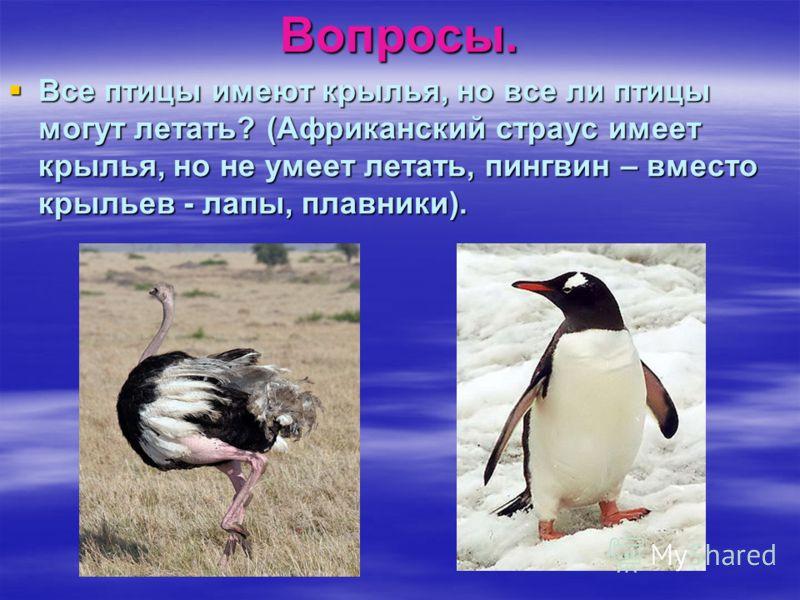 Вопросы. Все птицы имеют крылья, но все ли птицы могут летать? (Африканский страус имеет крылья, но не умеет летать, пингвин – вместо крыльев - лапы, плавники). Все птицы имеют крылья, но все ли птицы могут летать? (Африканский страус имеет крылья, н