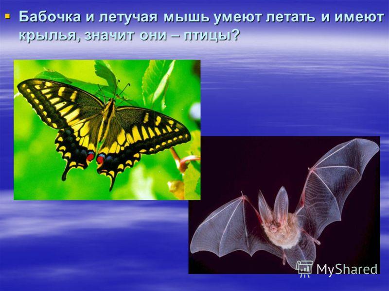 Бабочка и летучая мышь умеют летать и имеют крылья, значит они – птицы? Бабочка и летучая мышь умеют летать и имеют крылья, значит они – птицы?
