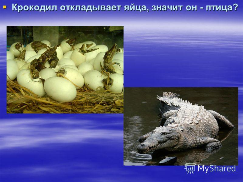 Крокодил откладывает яйца, значит он - птица? Крокодил откладывает яйца, значит он - птица?