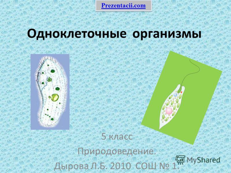 Одноклеточные организмы 5 класс Природоведение. Дырова Л.Б. 2010 СОШ 1. Prezentacii.com