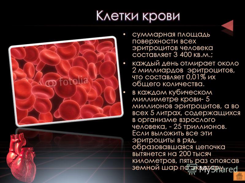 суммарная площадь поверхности всех эритроцитов человека составляет 3 400 кв.м.; каждый день отмирает около 2 миллиардов эритроцитов, что составляет 0,01% их общего количества. в каждом кубическом миллиметре крови- 5 миллионов эритроцитов, а во всех 5