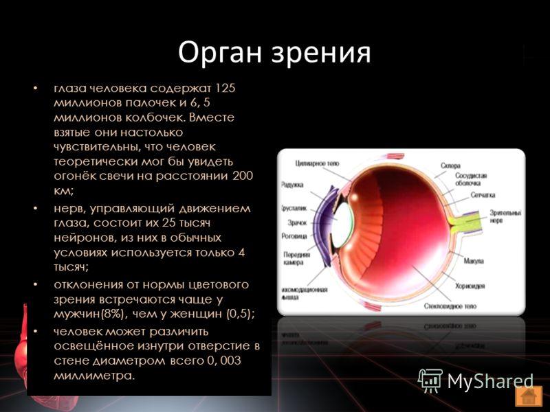 Орган зрения глаза человека содержат 125 миллионов палочек и 6, 5 миллионов колбочек. Вместе взятые они настолько чувствительны, что человек теоретически мог бы увидеть огонёк свечи на расстоянии 200 км; нерв, управляющий движением глаза, состоит их