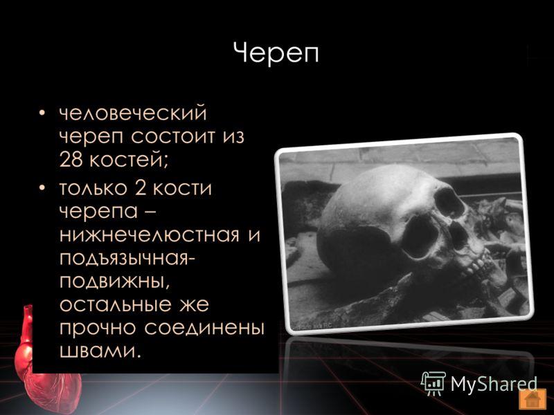 Череп человеческий череп состоит из 28 костей; только 2 кости черепа – нижнечелюстная и подъязычная- подвижны, остальные же прочно соединены швами.