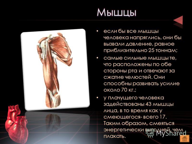 если бы все мышцы человека напряглись, они бы вызвали давление, равное приблизительно 25 тоннам; самые сильные мышцы те, что расположены по обе стороны рта и отвечают за сжатие челюстей. Они способны развивать усилие около 70 кг.; у плачущего человек