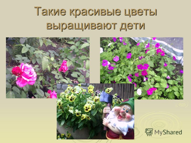 Такие красивые цветы выращивают дети