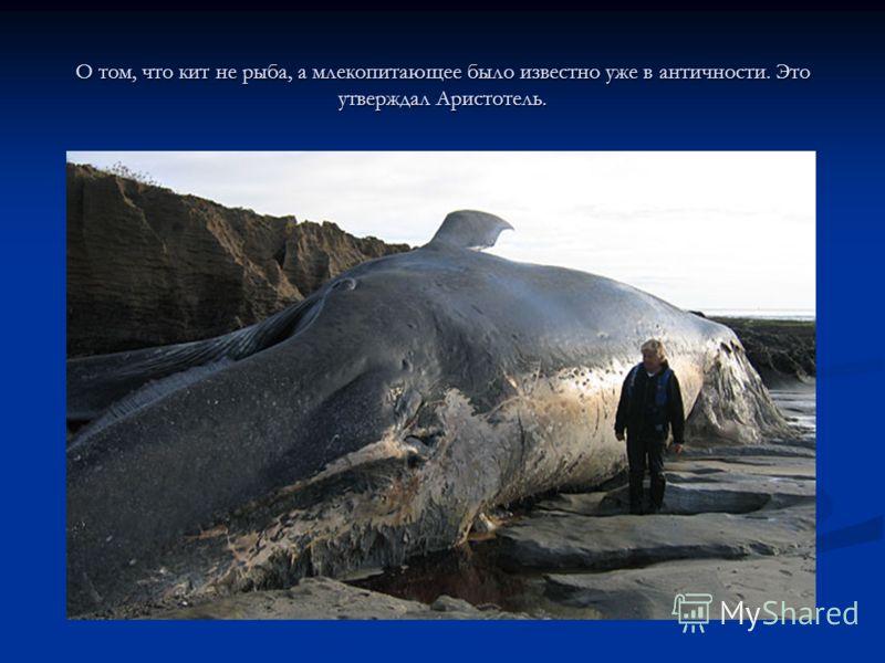 О том, что кит не рыба, а млекопитающее было известно уже в античности. Это утверждал Аристотель.