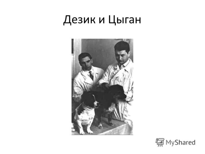 Дезик и Цыган
