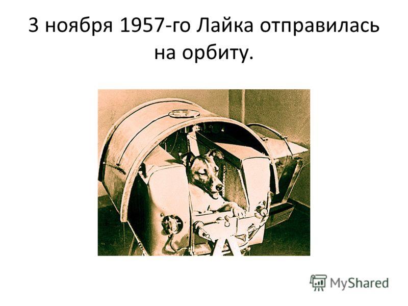 3 ноября 1957-го Лайка отправилась на орбиту.