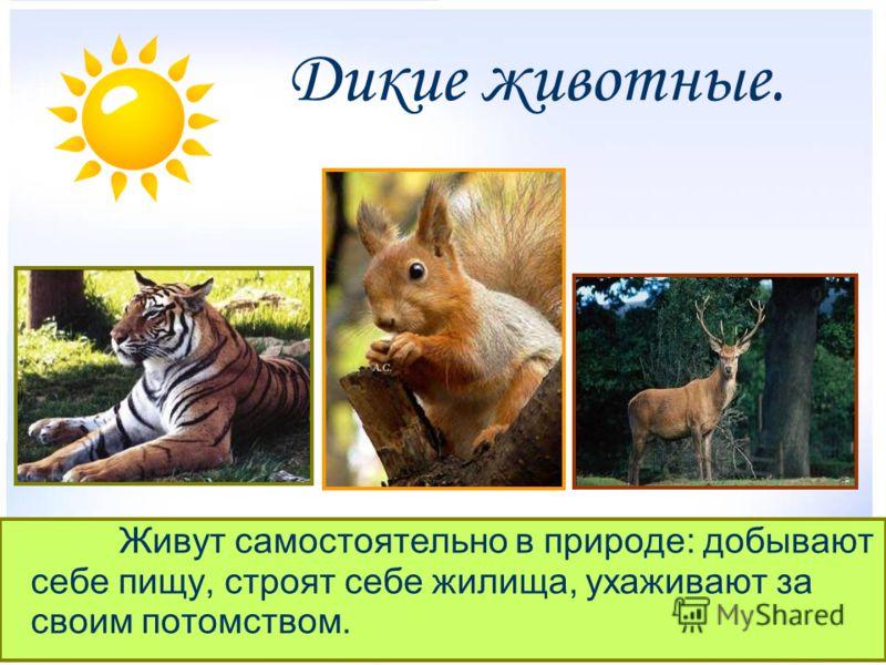 Дикие животные живут самостоятельно