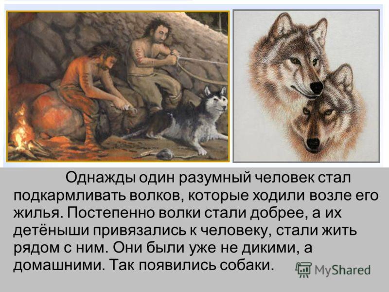 Однажды один разумный человек стал подкармливать волков, которые ходили возле его жилья. Постепенно волки стали добрее, а их детёныши привязались к человеку, стали жить рядом с ним. Они были уже не дикими, а домашними. Так появились собаки.