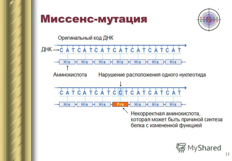 13 Миссенс-мутация