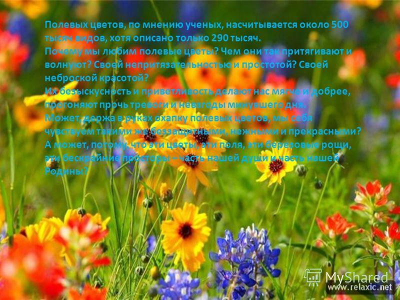 Полевых цветов, по мнению ученых, насчитывается около 500 тысяч видов, хотя описано только 290 тысяч. Почему мы любим полевые цветы? Чем они так притягивают и волнуют? Своей непритязательностью и простотой? Своей неброской красотой? Их безыскусность
