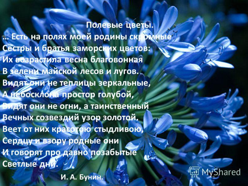 Полевые цветы. … Есть на полях моей родины скромные Сестры и братья заморских цветов: Их возрастила весна благовонная В зелени майской лесов и лугов. Видят они не теплицы зеркальные, А небосклона простор голубой, Видят они не огни, а таинственный Веч