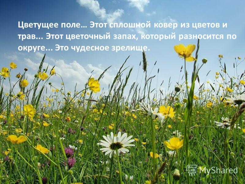 Цветущее поле… Этот сплошной ковер из цветов и трав... Этот цветочный запах, который разносится по округе... Это чудесное зрелище.