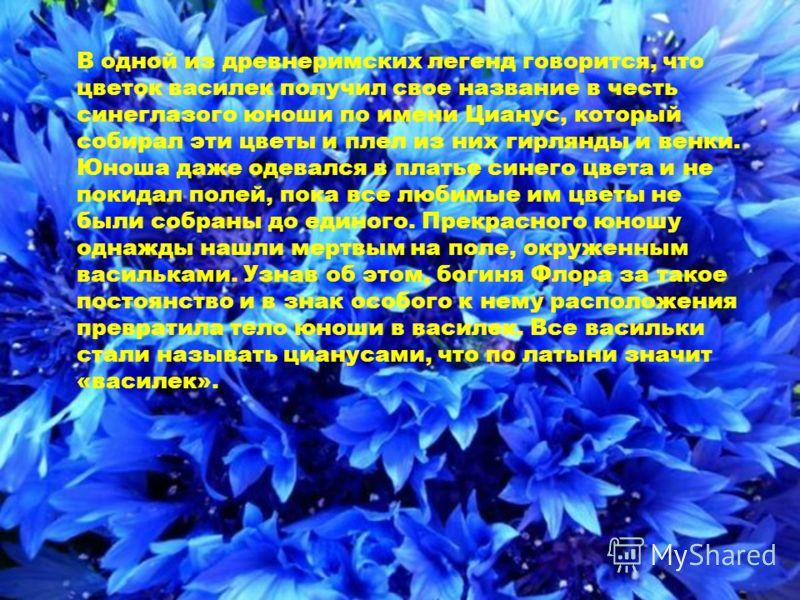 В одной из древнеримских легенд говорится, что цветок василек получил свое название в честь синеглазого юноши по имени Цианус, который собирал эти цветы и плел из них гирлянды и венки. Юноша даже одевался в платье синего цвета и не покидал полей, пок