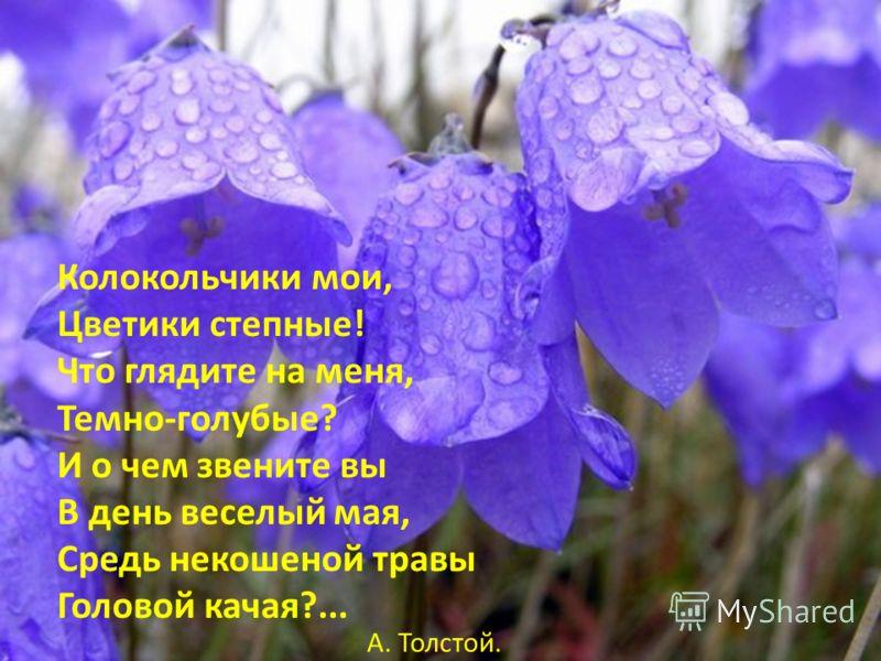Колокольчики мои, Цветики степные! Что глядите на меня, Темно-голубые? И о чем звените вы В день веселый мая, Средь некошеной травы Головой качая?... А. Толстой.