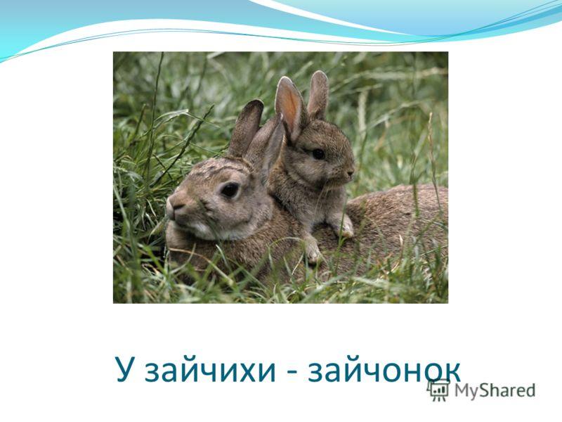 У зайчихи - зайчонок